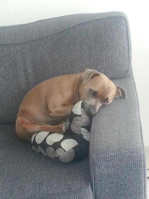 Max snuggling a cushion