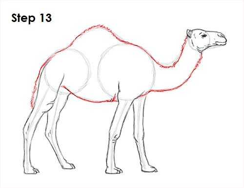 Drawing Camels with Easy Steps Instructional Lesson for ...