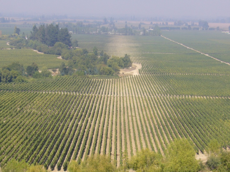 Colchagua Valley, Wire Region, Chile http://www.vivaexpeditions.com/south-america-tours/chile-travel/lakes-district-discovery-santiago-to-bariloche