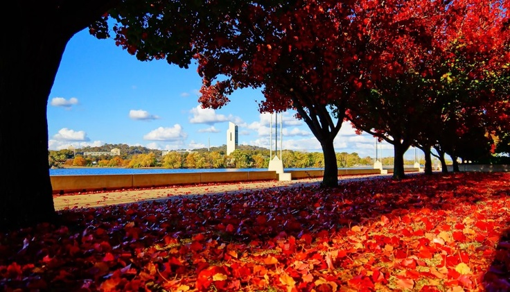 Canberra in autumn, along Reconciliation Place.