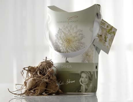 Packaging for Frederique's choice for Dahlia flower bulbs. Made by Luxapack.