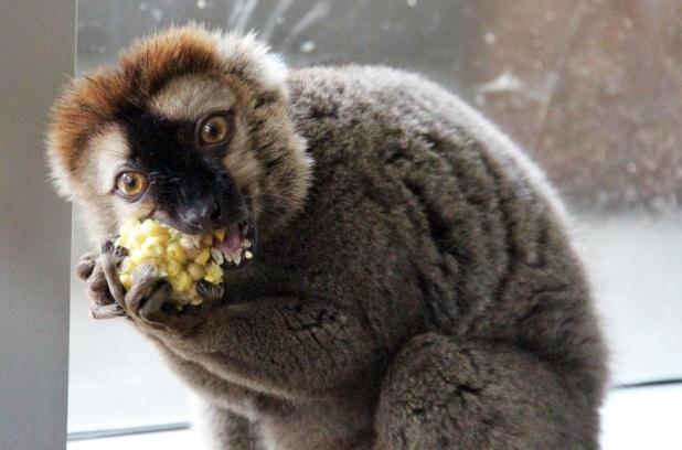 Slideshow: Edmonton Valley Zoo organic garden enriches animals, atmosphere   Metro