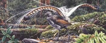 lyrebird art - Google Search