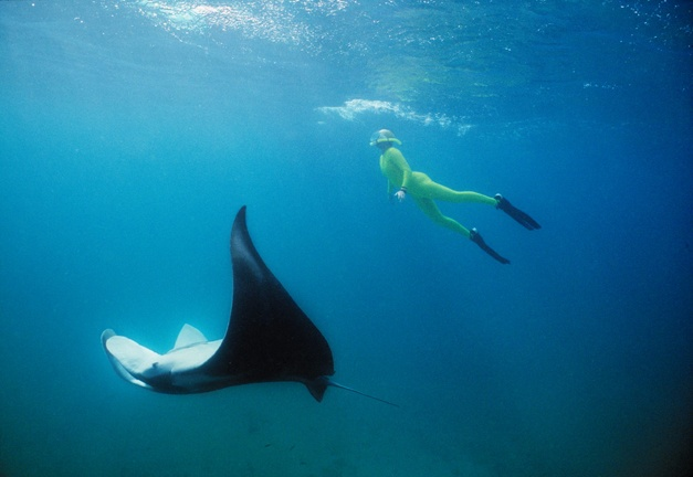 I have done this.... Snorkel with manta rays- Coral Bay.