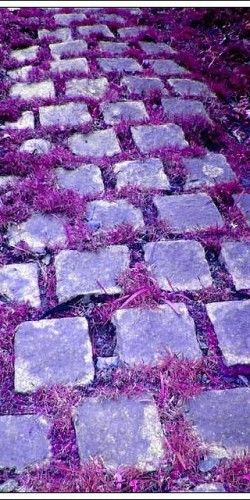 I want to know how they got their grass purple.... My whole yard would look like this #lovelylavender