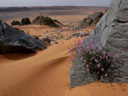 stone flower - Deserts Wallpaper ID 1170883 - Desktop Nexus Nature