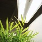 Artificial lighting options for indoor gardeners can sometimes be confusing. They may also be unsure about how much light their plants should get. This article can help with all that.