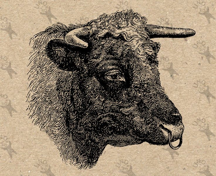 Vintage Bull Image Instant Download Digital Head Bull printable picture clipart graphic prints transfer burlap stickers decor t shirt 300dpi by UnoPrint on Etsy