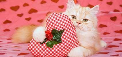 pe cat e valentine's day 2013