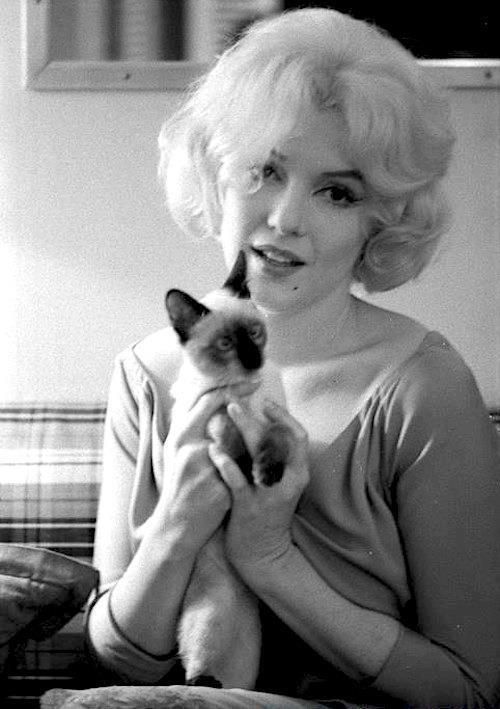 A rare photo of Marilyn Monroe – with Siamese Cat - Photographed by Robert Vose in her dressing room, during the filming of 'Let's Make Love', 1960. Courtesy: King Rose Archives.