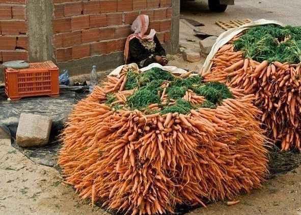 Надо перемешать семена моркови с высушенным испитым кофе. Эффект от этого такой: меньший расход семян (меньше прореживать), а также кофе выполняет роль удобрения. А самое главное - запах кофе отпугивает паразитов и вредителей моркови! И урожай всегда отличный и хранится всю зиму!