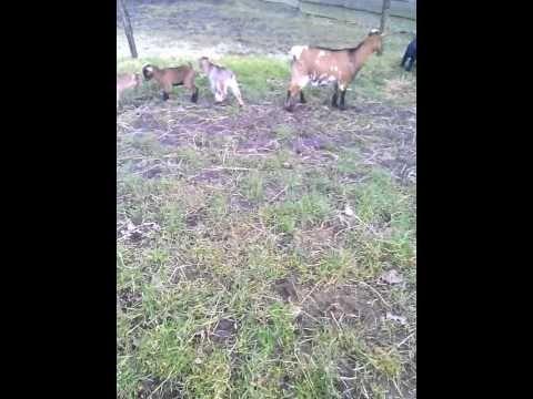 de geitjes de eerste dag buiten