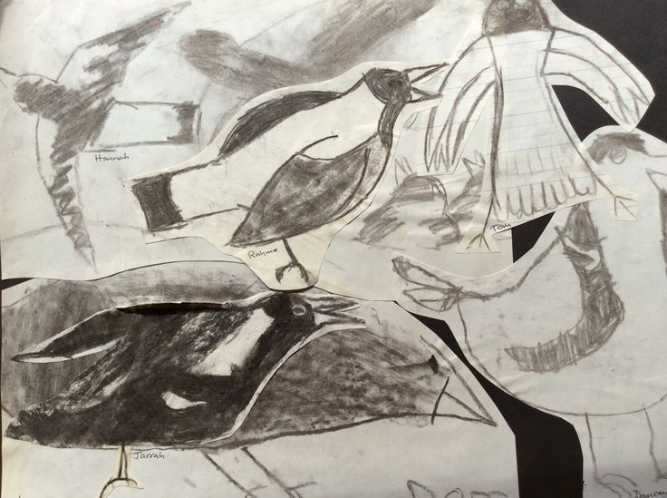 Sketches of magpies. Charcoal.