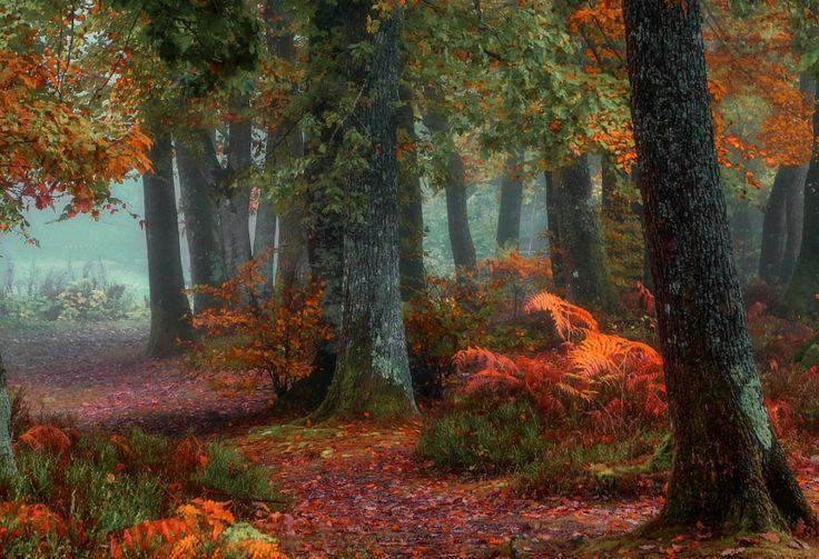 Colorful nature! by Patrice Thomas   Patrice Thomas: Photos          500px