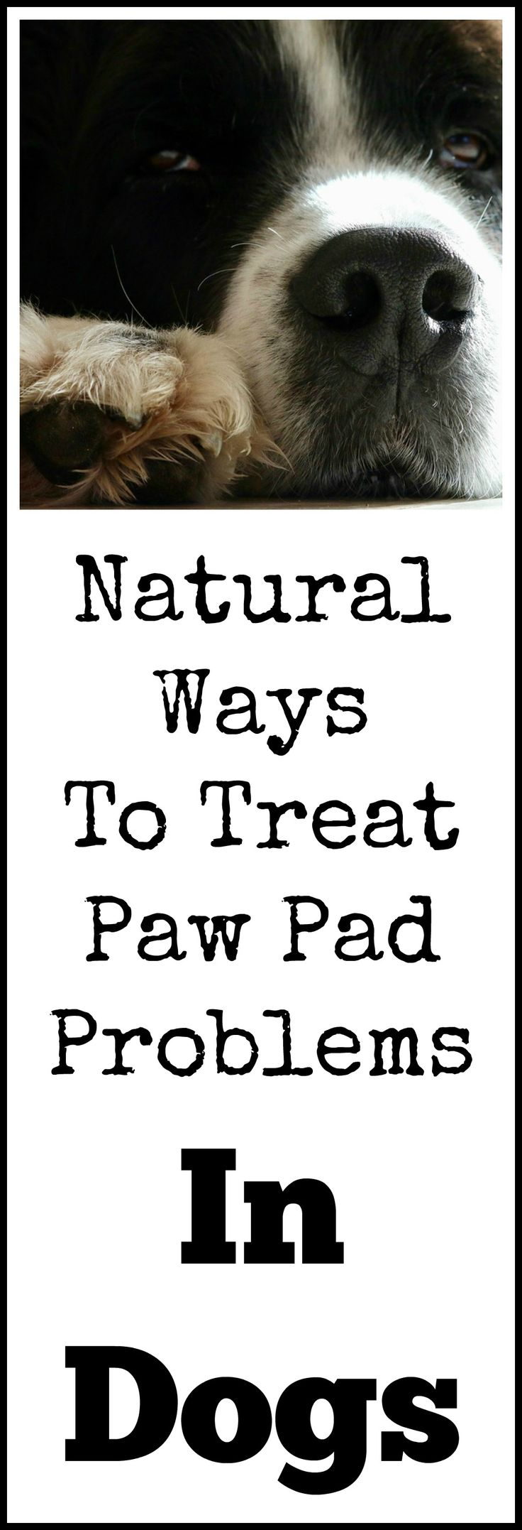 Natural remedies for dog paw pad problems.