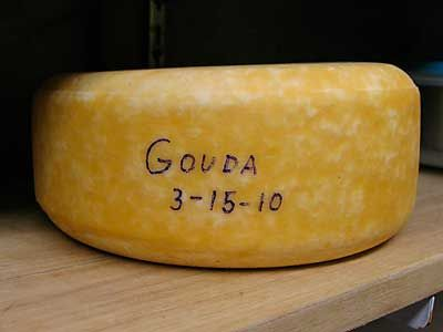 GOUDA -  Whether you are looking to make a small fresh Gouda or one with some age, we have included the details for this wonderful sweet cheese. The washing of the curds in warm water are essential to maintaining the soft texture.