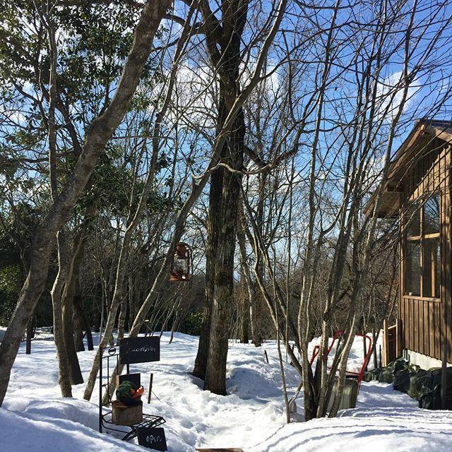 【rurikoharu】さんのInstagramをピンしています。 《✨❄️🌲🌳森のスープ屋さん 🌳🌲❄️✨ _  こちらで  ひと息  大山のペンション🏡 立ち並ぶ  森の中  冬物語  ぴったりな外観  Openを知らせるボードと野菜や林檎🍎目印 そして  クロモジなどの林  雪に木立の影が伸びた中 季節限定の白い小径に わくわく感を抑えながら歩き 🚪ドアへ  _  _ 「優しい時間 」  もう、随分まえのドラマ 思い出しました  #森のスープ屋さん #森の中 #雪#森 #雪の小径 #冬の木立 #優しい時間 #鳥取》