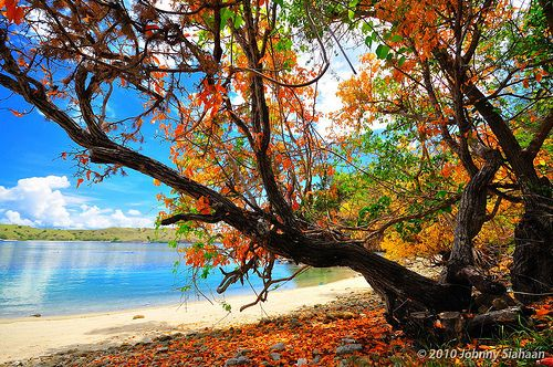 Pink Beach, Komodo Island, Indonesia - be there http://www.wego.co.id/?ts_code=464dc&sub_id=&locale=id&utm_source=464dc&utm_campaign=WAN_Affiliate&utm_content=text_link