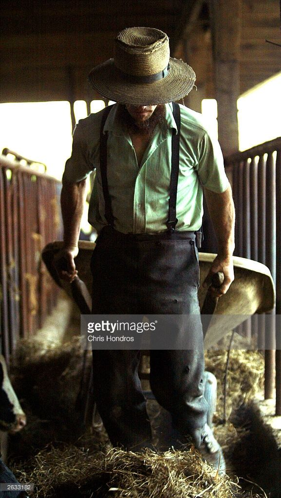 Amish farmer Daniel Stoltzfus drags a wheelbarrow though one of his barns October 22, 2003 in Wakefield, Pennsylvania. The Amish, traditionalist farmers who spurn machinery and other modern conveniences, live off the land much as they have for centuries in various communities in rural Pennsylvania and Ohio, and now live side-by-side with modern Americans.