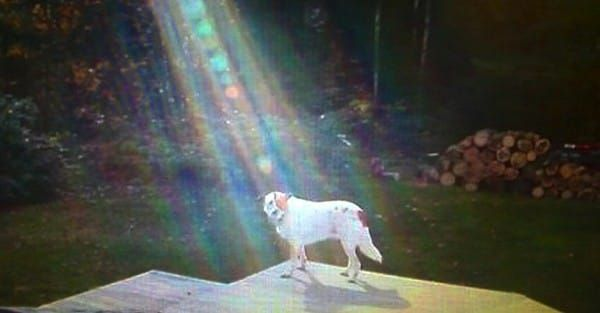 Fallen soldier's family brings his dog, Hero, home from Iraq.  Then when a local TV station came to interview family, they saw Hero on edge of patio in this beam of light.