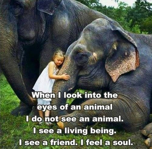 "animals have souls If pets/animals do have a ""soul"" or immaterial aspect, it must therefore be of a different and lesser ""quality"" this difference possibly means that pet/animal "" souls""."