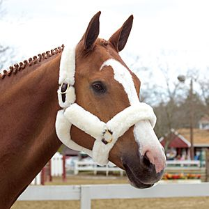 SmartPak Shipping Halter - Keep your horse comfortable during transport with a Sheepskin Shipping Halter. Each halter is handmade by skilled Amish craftsman of the highest quality leather.