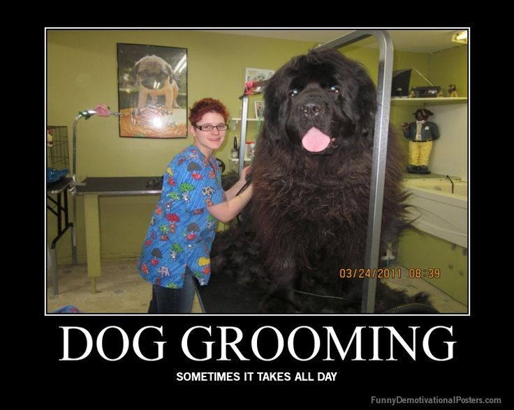 43 best dog grooming santa barbara images on pinterest dog rare breed of newfoundland dogs bred to hunt bears oh my gosh what do you even feed these things i hope this is a real dog lol i want one solutioingenieria Choice Image
