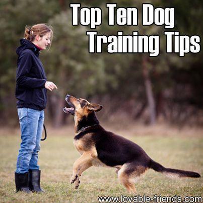 Donna Hill Service Dog Training