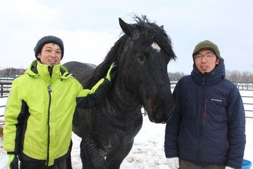 馬で木材を運搬する「馬搬(ばはん)」の復活を目指す青森県の八戸市森林組合(赤澤栄治組合長)の取り組みに、七飯町東大沼の「大沼流山牧場」の重種馬「オスカ」(雄4歳)が貢献した。オスカはベルギー産のベルジャンホースという種類で、おとなしくて我慢強い性格。体格はばんえい馬よりは小さいが体重は800キロほどあり、自重と同じくらいの重さの荷物を引くことができる力自慢という。