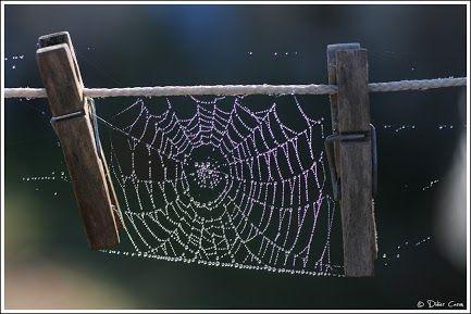 手机壳定制air max   womens black Didier Caron shared this very cool spider web with Google