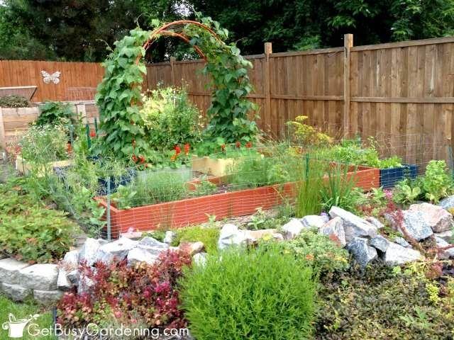 2014 Vegetable Garden In July