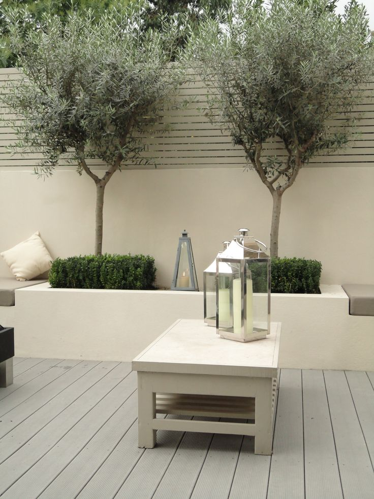 Contemporary rendered raised borders with olive trees in courtyard. Evergreen, soft grey tones, hardy and easily shaped.