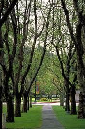 Mills College - Oakland, CA How beautiful are these trees?