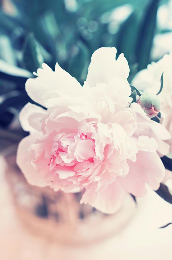 Beautiful Peony Photograph by Oksana Ariskina #fineartamerica #HomeDecor #FineArtPhotography #photography #FineArtPrint #FineArtArtist #PrintsForSale #art #artforsale #inspiration #ArtForHome #creative #OksanaAriskina #Poppy #Flower #Tender #Pastel #wallart #buyart #buyartonline #home #decor #nature www.oksana-ariskina.pixels.com @pixels @fineartamerica