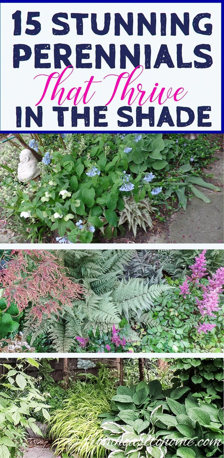 Shade Flowers For Pots Front Porches Curb Appeal