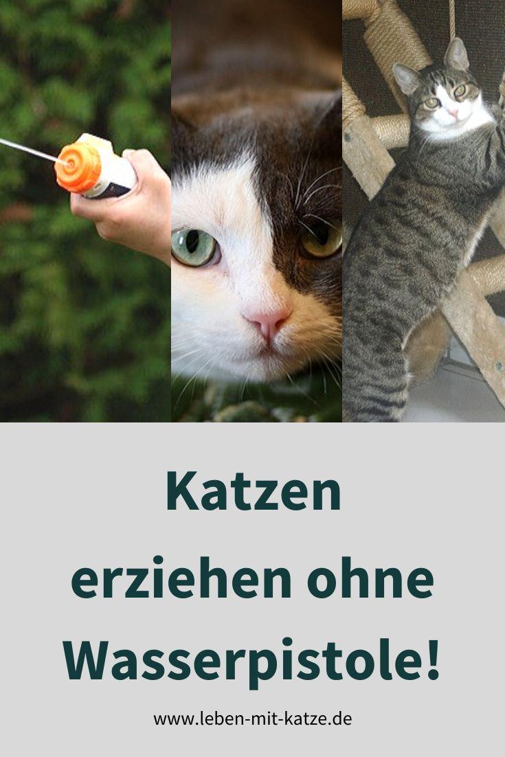Katzen Erziehen Mit Der Wasserpistole In 2020 Mit Bildern
