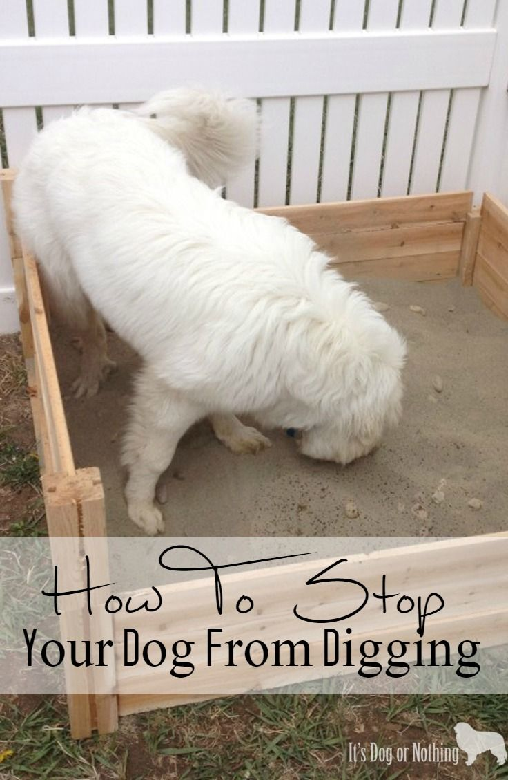 how to stop your dog from digging under the fence