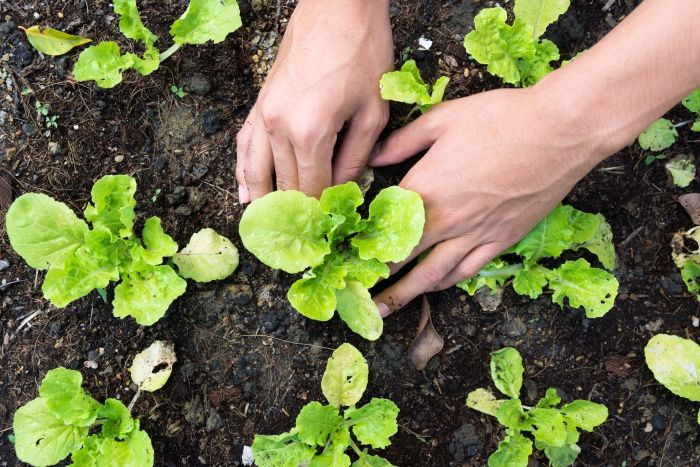 6 Tips That Every NEW Gardener Should Know