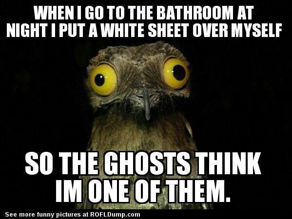 Trolling the ghost #meme #funny #ghost #lol #toilet