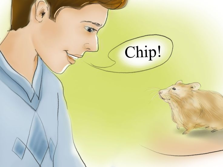 How+to+Train+Your+Hamster+to+Come+when+You+Call+--+via+wikiHow.com