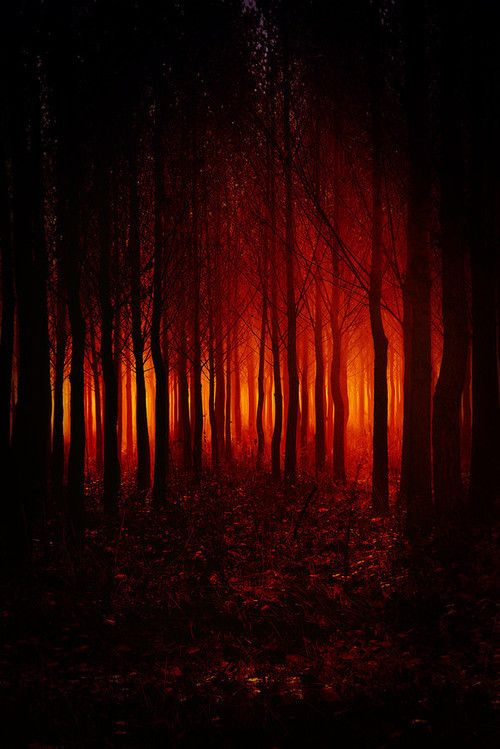 """""""The farther I went, the more an eerie feeling settled into me, like a fog burning red. A warning...."""""""