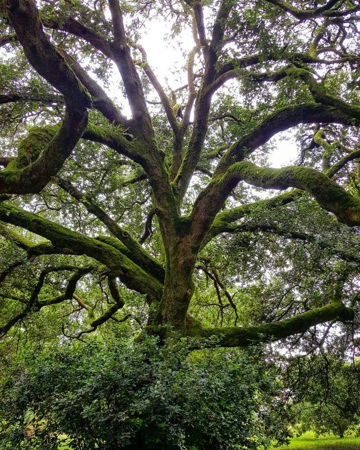 Mother nature's veins