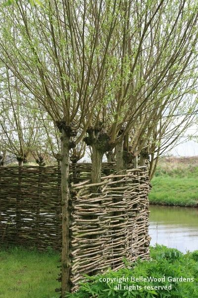 "Here's a ""grow-your-own fence"" - the pollarded willows not only supply the withes, they're also the fence posts"