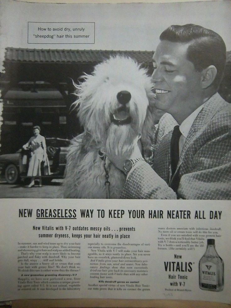 1953 Vintage Vitalis Mens Hair Tonic with V Old English Sheepdog Dog Ad | eBay