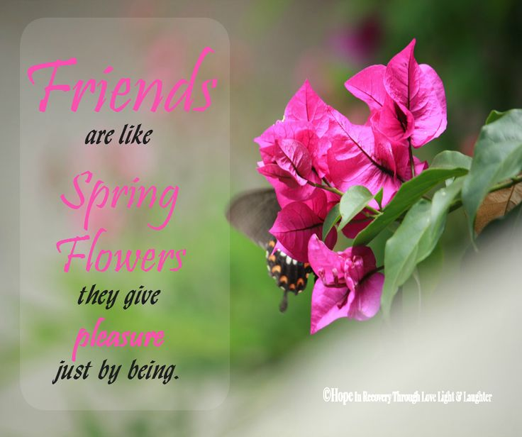 Beautiful Flowers Images With Friendship Quotes: 17 Best Images About Hope In Recovery Through Love Light