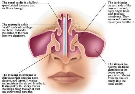 nasal cavities | yoga | pinterest | what would, wouldn't and do, Human Body