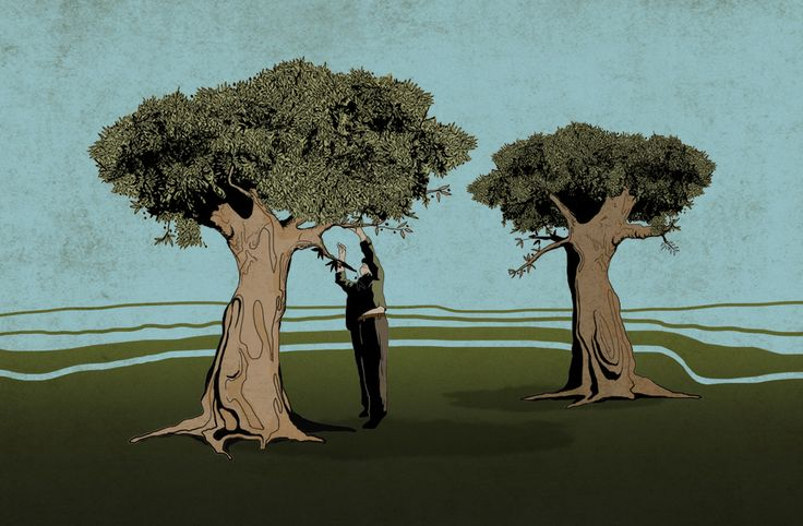 Olive harvest - Rhapsody Γ' | Illustration for the website Ithaki olive oil