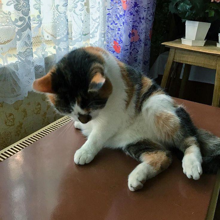 Kočka na topení #cat #iphonefoto #nofilter
