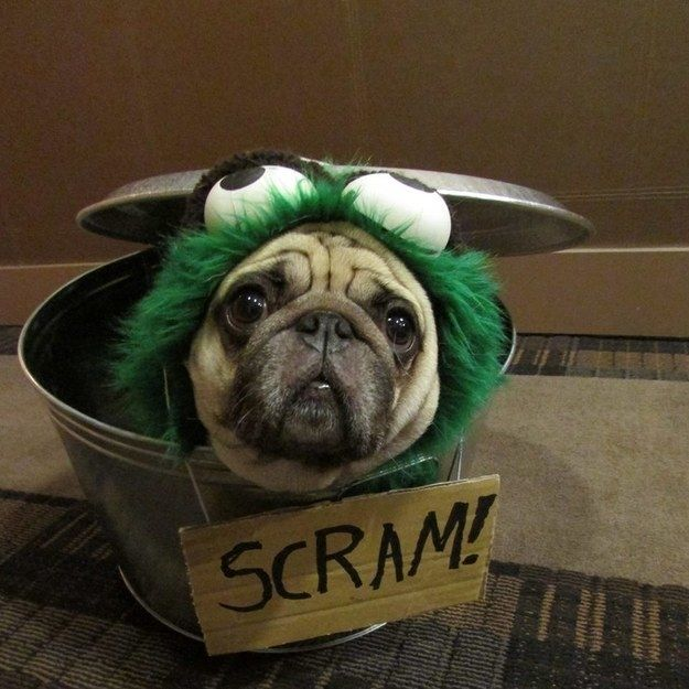 this pug who makes a great oscar the grouch halloween ideasdog halloween costumesdog - Pugs Halloween Costumes