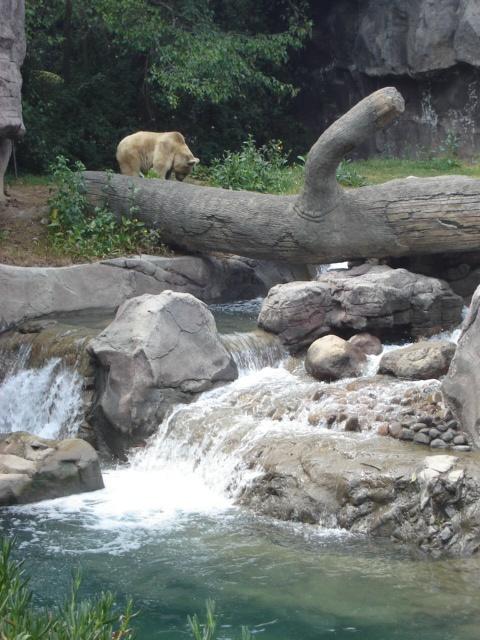 #Zoologico de #Chapultepec, uno de los más completos del mundo, con una inmensa cantidad de especies de todas partes del mundo.